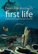 O Princípio da Vida (First Life)