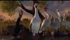Kurzfilm: Flamingo Pride // Shorts Collect