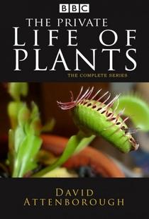 A Vida Privada Das Plantas - Poster / Capa / Cartaz - Oficial 1