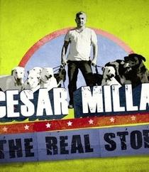 A Vida de Cesar Millan - Poster / Capa / Cartaz - Oficial 1