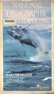 National Geographic Vídeo - As Grandes Baleias - Poster / Capa / Cartaz - Oficial 1