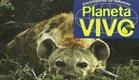 Planeta Vivo - Os Grandes Felinos e Outros Carnívoros