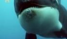 Orcas - Assassinas ou Vítimas - Discovery Channel - Completo