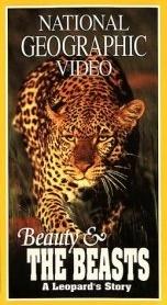O Olho do Leopardo - Poster / Capa / Cartaz - Oficial 1