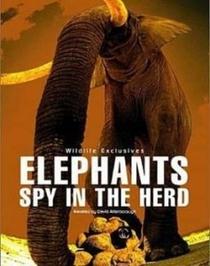 Elephants - Spy in The Herd - Poster / Capa / Cartaz - Oficial 2