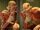 Super Interessante Coleções O Corpo Humano (.)