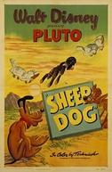 Sheep Dog (Sheep Dog)