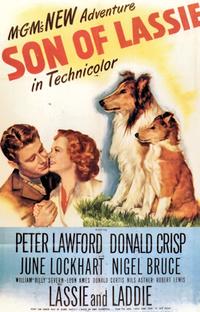 O Filho de Lassie - Poster / Capa / Cartaz - Oficial 1