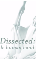 Dissecado: A Incrível Mão Humana (Dissected: The Incredible Human Hand)