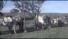Filme - Não Aperta, Aparício (1970)
