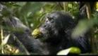 Chimpanzee Movie Trailer Official (HD)