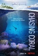 Em Busca dos Corais (Chasing Coral)