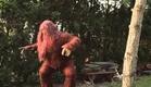 Sexsquatch: The Legend of Blood Stool Creek Movie Trailer