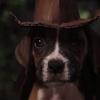 """Indiana Jones: """"Os Caçadores da Arca Perdida"""" ganha versão com cachorrinhos e gatinhos"""