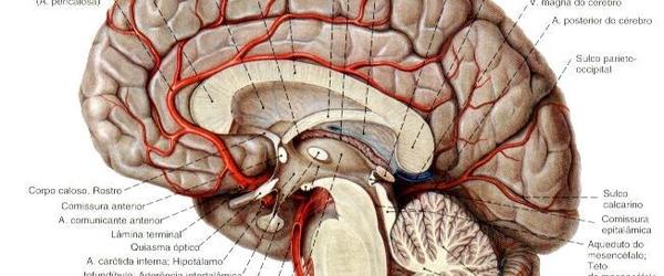 É verdade que utilizamos apenas 10% do nosso cérebro?
