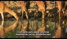 BBC - Índia  Ganges - O Rio da Vida [Parte 1/4]