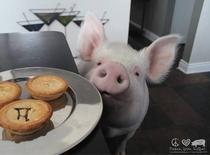 Inteligência Animal - O Porco - Poster / Capa / Cartaz - Oficial 2