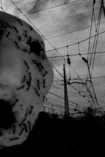 Ant Head - Poster / Capa / Cartaz - Oficial 1