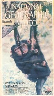 National Geographic Vídeo - Os Chipanzés Selvagens - Poster / Capa / Cartaz - Oficial 1