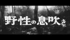 曲谷守平監督『九十九本目の生娘』(1959) 予告編