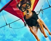 Ping: Esperto pra Cachorro - Poster / Capa / Cartaz - Oficial 1