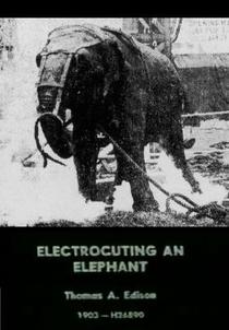 Eletrocutando um Elefante - Poster / Capa / Cartaz - Oficial 1