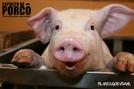 Espírito de Porco (Espírito de Porco)