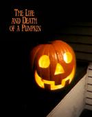 A Vida & Morte de uma Abóbora (The Life & Death of a Pumpkin)