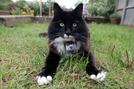 A Vida Secreta dos Gatos (Secret Life Of Cats)