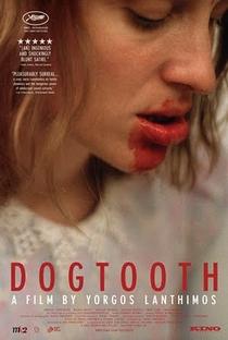 Dente Canino - Poster / Capa / Cartaz - Oficial 3