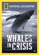 Baleias em Perigo (Whales in Crisis)