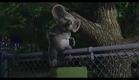 The Wild [trailer] (2006)