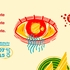 Festival Olhar de Cinema define nova data para sua 9ª edição