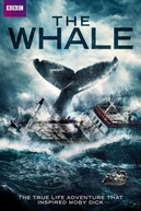 The Whale  (The Whale )