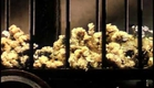 Gibbons - The Hunger Artist (2002)