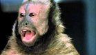 Monkey Shines Official Trailer #1 - Stanley Tucci Movie (1988) HD