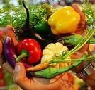 Projeto PANCs - Soberania Alimentar e Biodiversidade Palpável (Projeto PANCs - Soberania Alimentar e Biodiversidade Palpável)