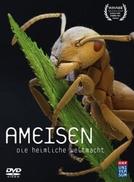 Formigas: O Poder Secreto da Natureza