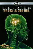 How Does the Brain Work? (How Does the Brain Work?)