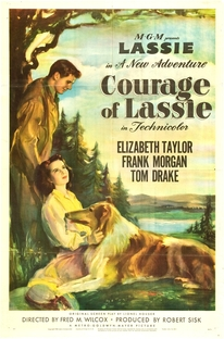 A Coragem de Lassie - Poster / Capa / Cartaz - Oficial 2
