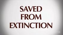 Salvos da Extinção - Poster / Capa / Cartaz - Oficial 1