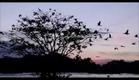 Amazônia - Trailer