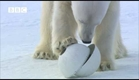 Very funny - Polar Bear wrecks Spy Cameras! - Polar Bear Spy on the Ice (David Tennant)