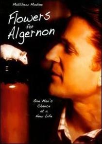 Um Amigo para Algernon  - Poster / Capa / Cartaz - Oficial 1