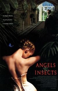 Anjos e Insetos - Poster / Capa / Cartaz - Oficial 1