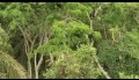 French Bonobo Documentary (part of)