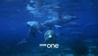 Dolphins: Spy in the Pod: Trailer - BBC One