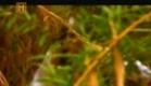 Os Mistérios do Jardim do Éden Trailer.avi