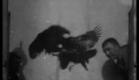 1894 - Cockfight, no. 2