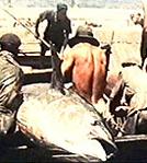 Agricultores do Mar (Contadini del mare)